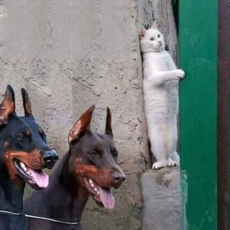 躲避两只恶犬躲在墙角的喵咪_表情包制作_表情包 DIY-表情包原图-表情包模板